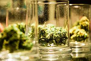 Cannabis in jars on a table