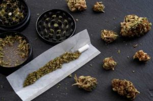 Pre rolled cannabis joint with weed bunches together on a table