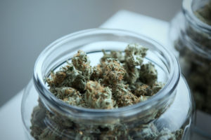 jar contains cannabis that will be used in pre-rolled blunts