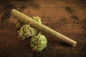 joint and cannabis plant sitting on table